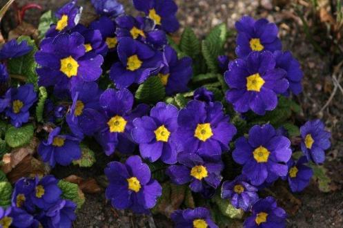Winter 2012 - Spring 2013 378